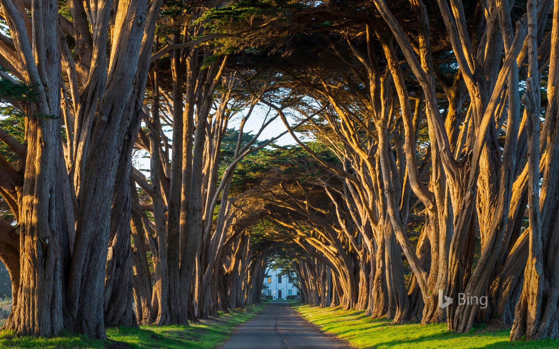 Cypress tree tunnel at Point Reyes National Seashore in California