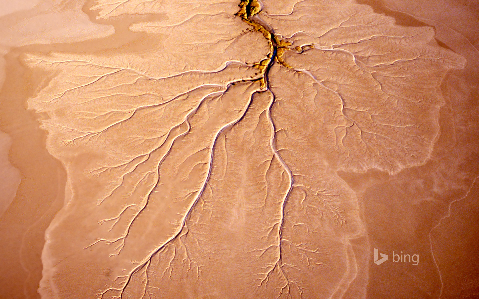 Root structure in a mudflat near Norman River in Queensland, Australia