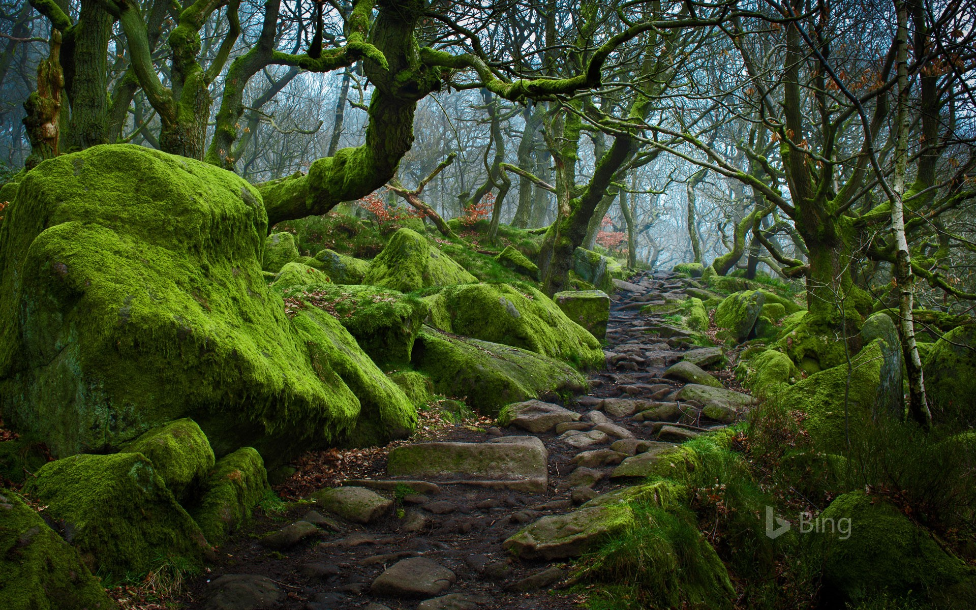 Forest path in Padley Gorge in Derbyshire