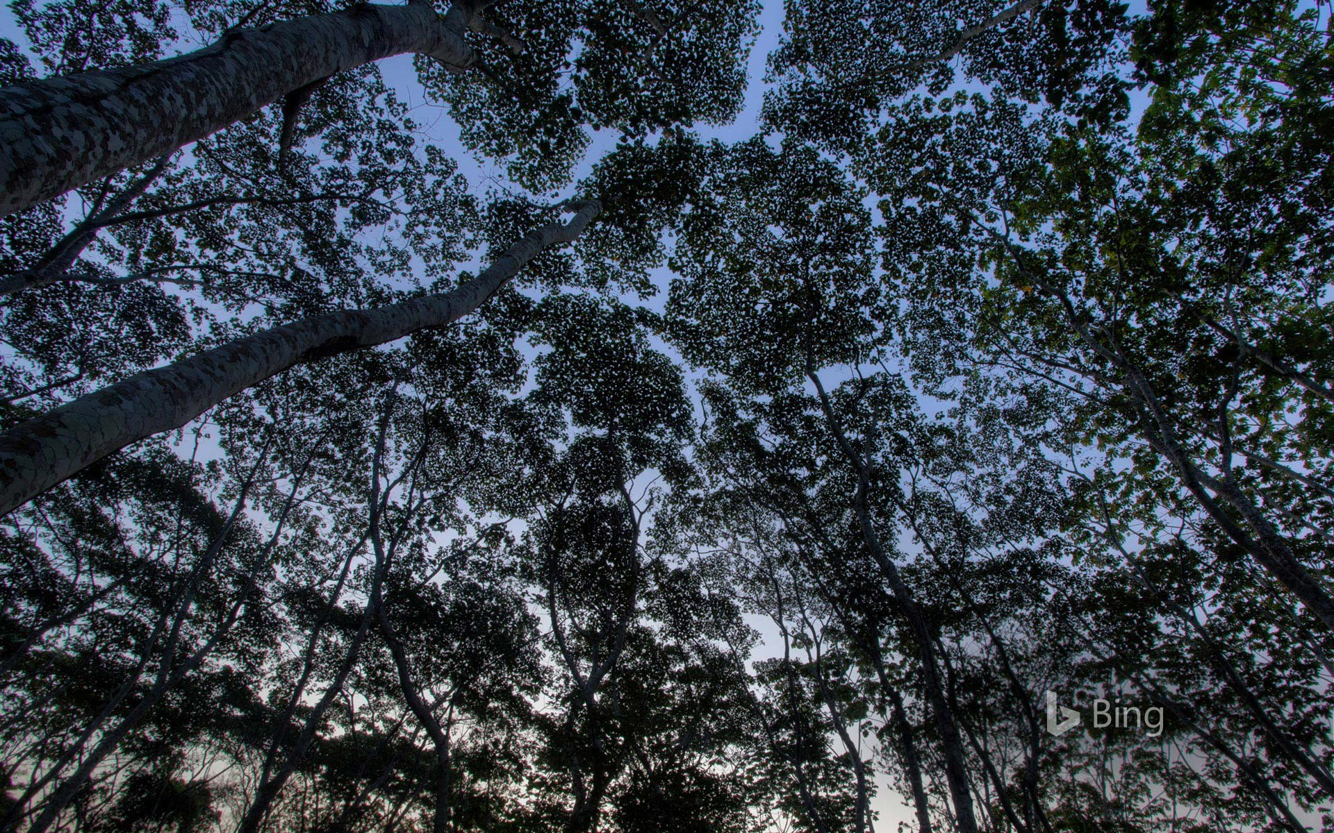 The tree canopy in the Tambopata National Reserve of the Peruvian Amazon (© Patrick Brandenburg/Tandem Stills + Motion)