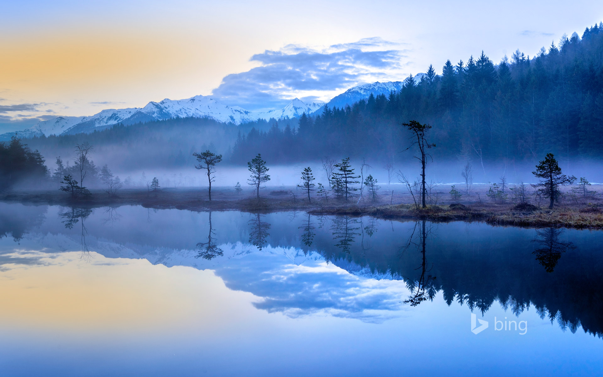The misty bogs of Pian di Gembro Regional Reserve near Aprica, Italy