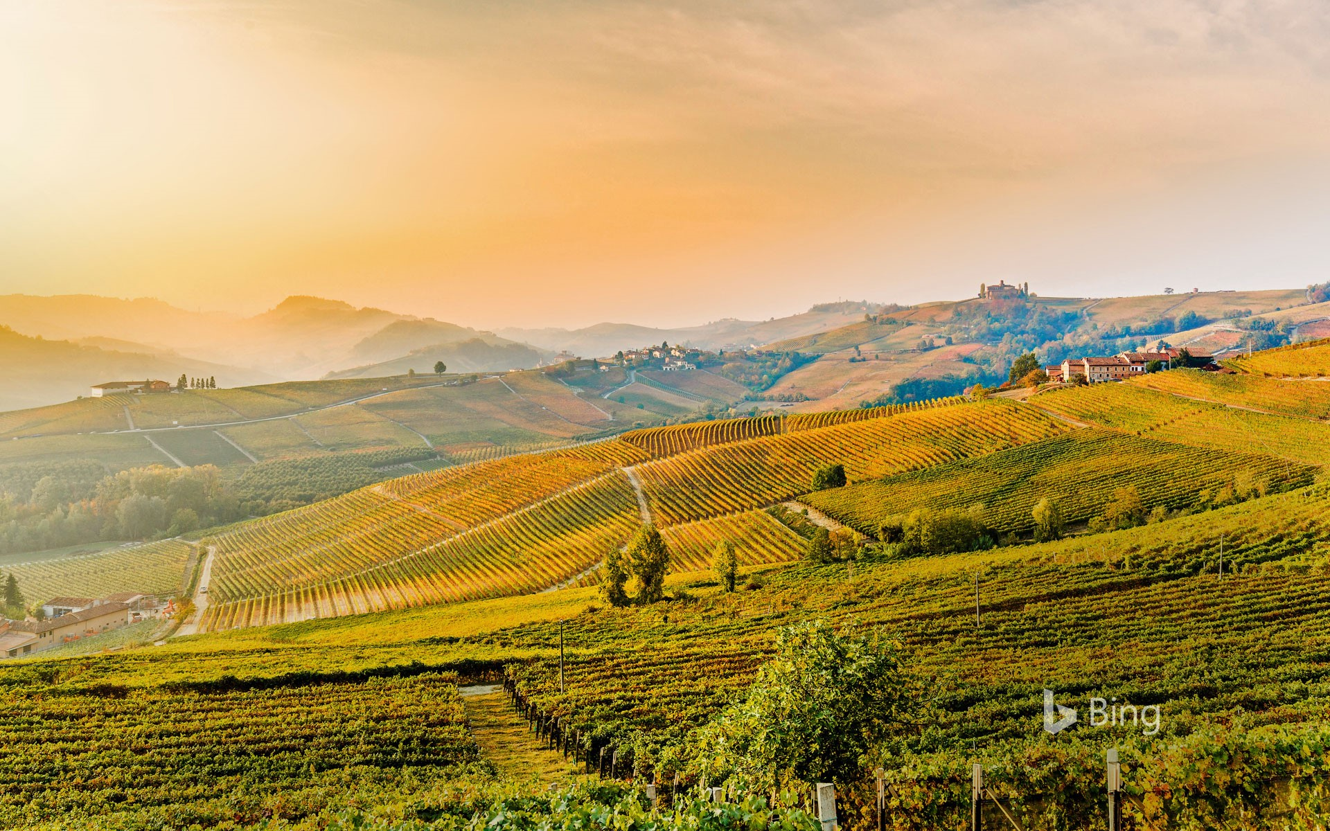 Vineyards of Barolo, Piedmont, Italy