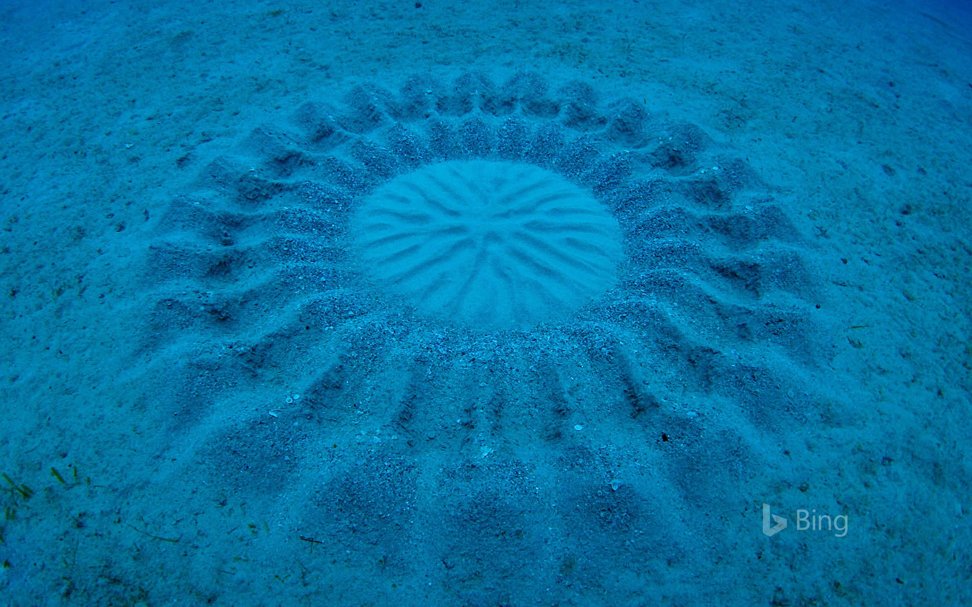 Sand patterns made by pufferfish near Amami Oshima, Kagoshima, Japan