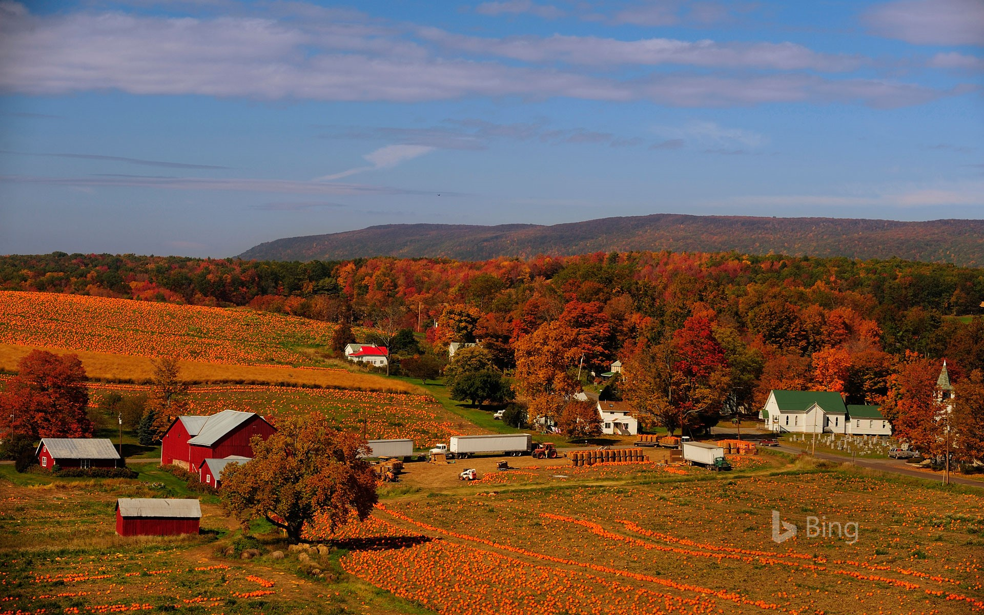 A pumpkin patch in Columbia County, Pennsylvania
