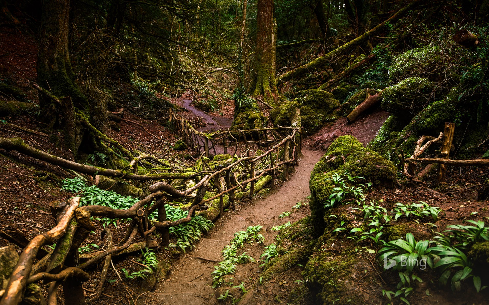 Path through Puzzlewood, Forest of Dean, Gloucestershire