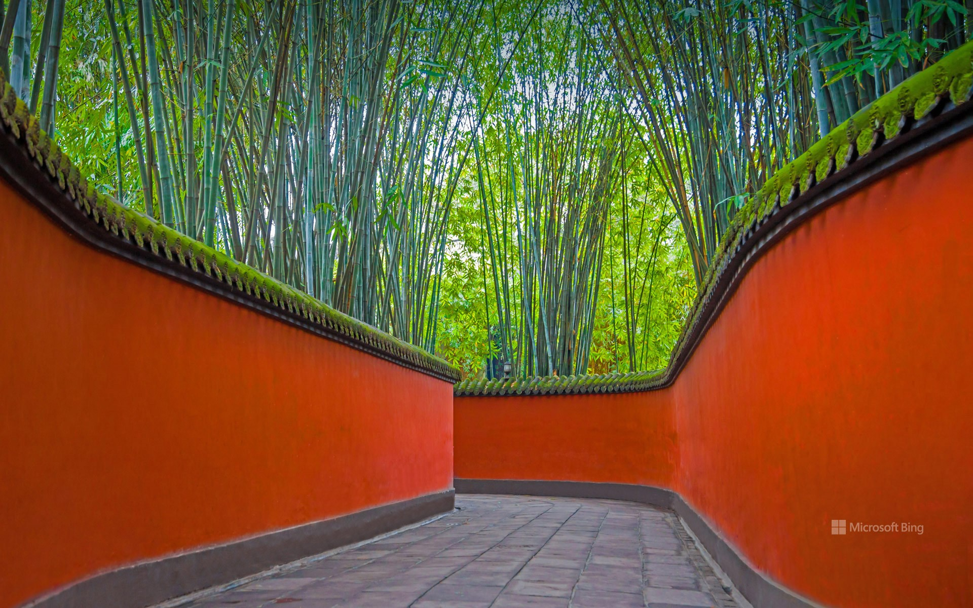 Alley with red walls and bamboo grove in Wuhou Temple, Chengdu, Sichuan province, China
