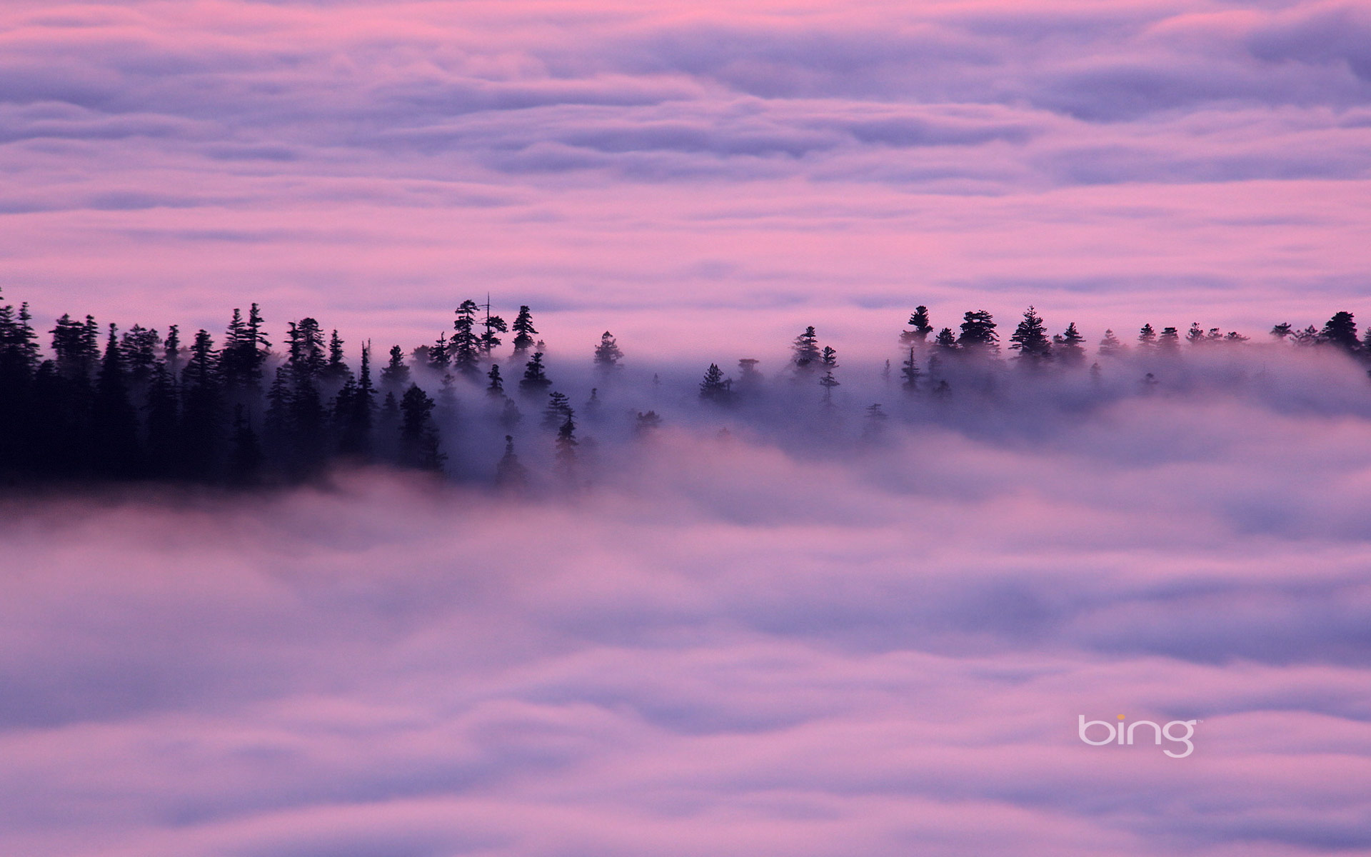 Fog drifts over the Redwood National and State Parks, California