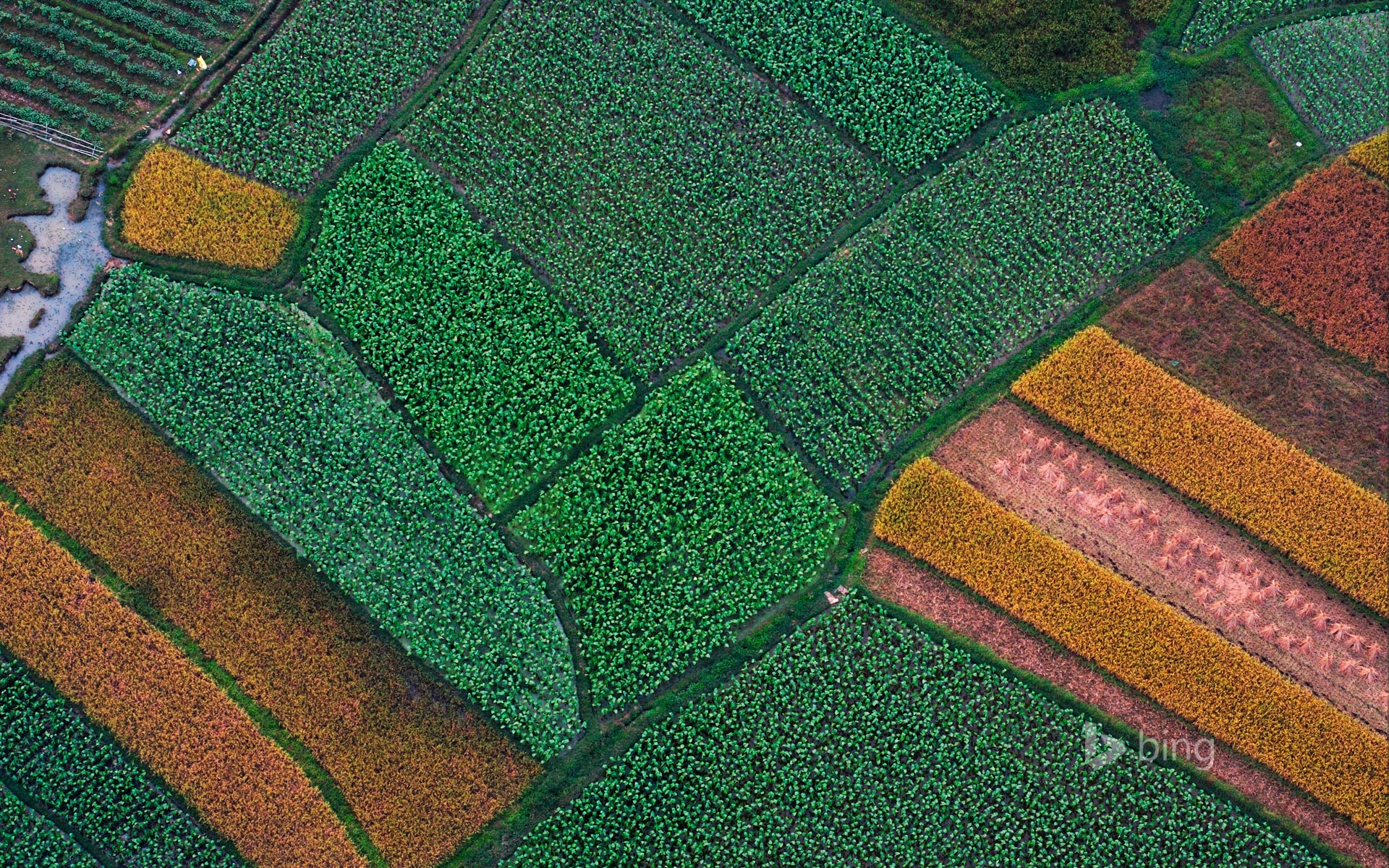 Aerial picture, field structure before rice harvestation, Guilin, Guanxi, China