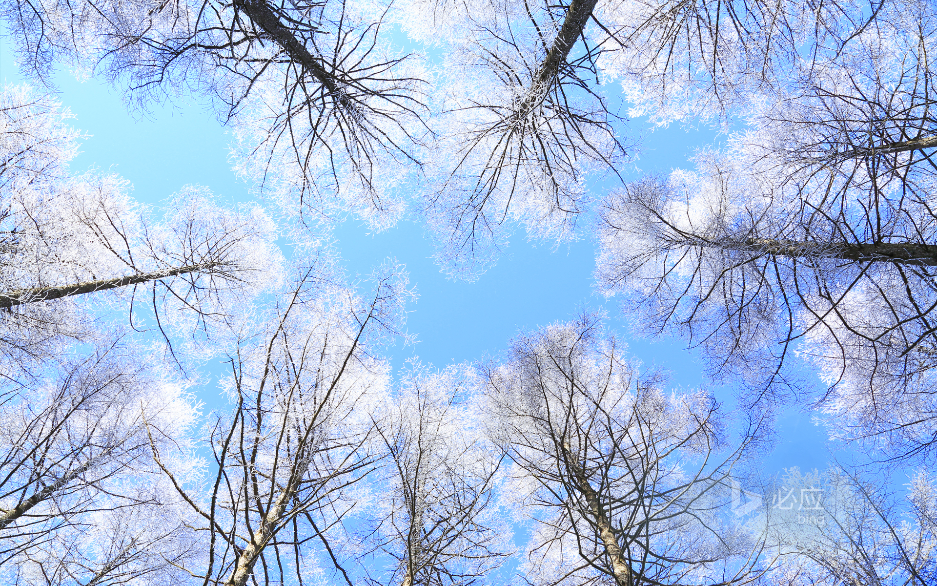 Over the larch forest in Nagano