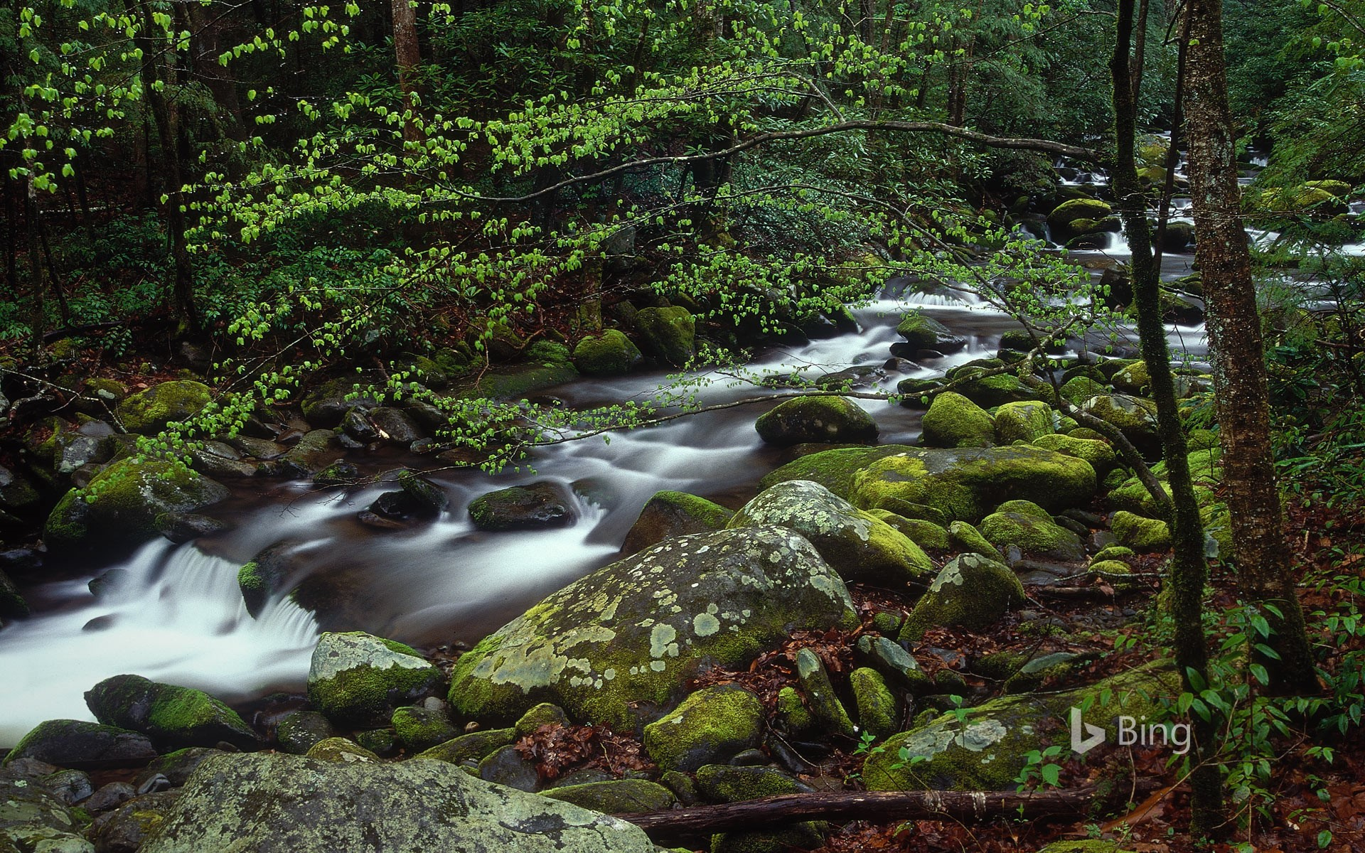 Roaring Fork In Great Smoky Mountains National Park
