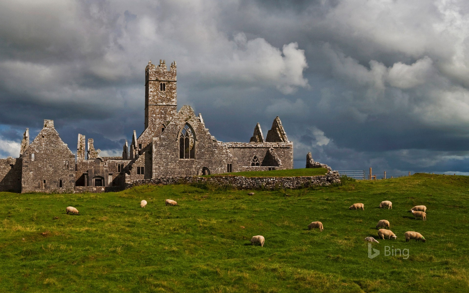 Ross Errilly Friary, County Galway, Ireland