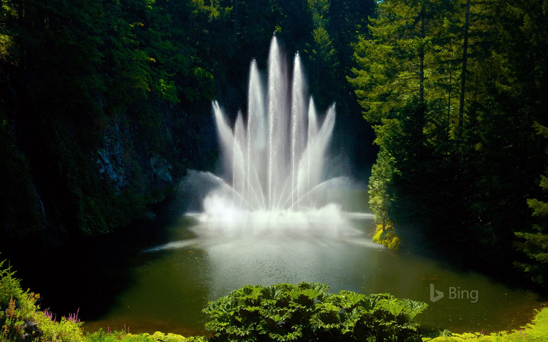 Ross fountain at butchart gardens in victoria british columbia ross fountain at butchart gardens in victoria british columbia canada reimar 8 altavistaventures Choice Image