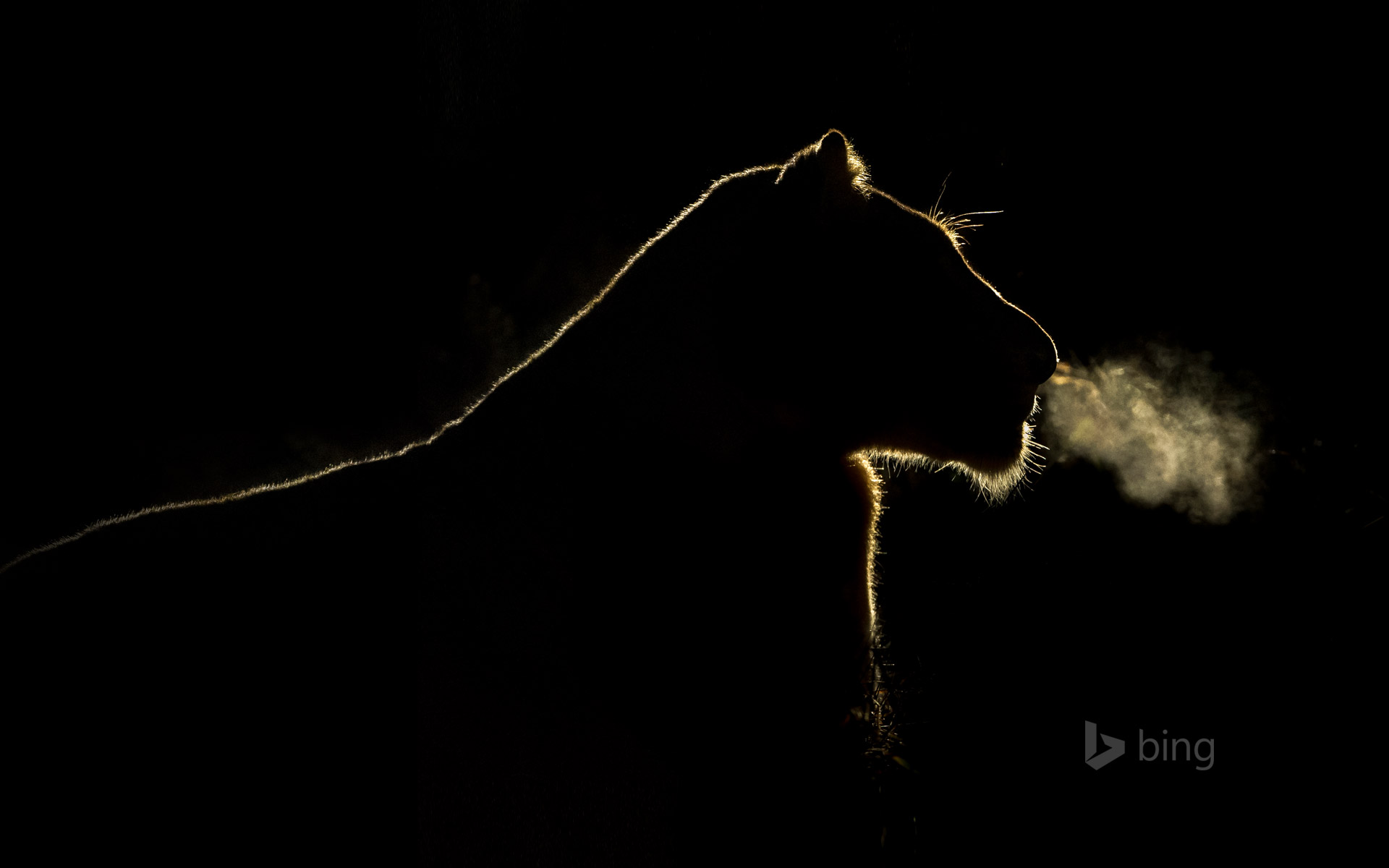 A lioness at night in the Sabi Sand Game Reserve, South Africa