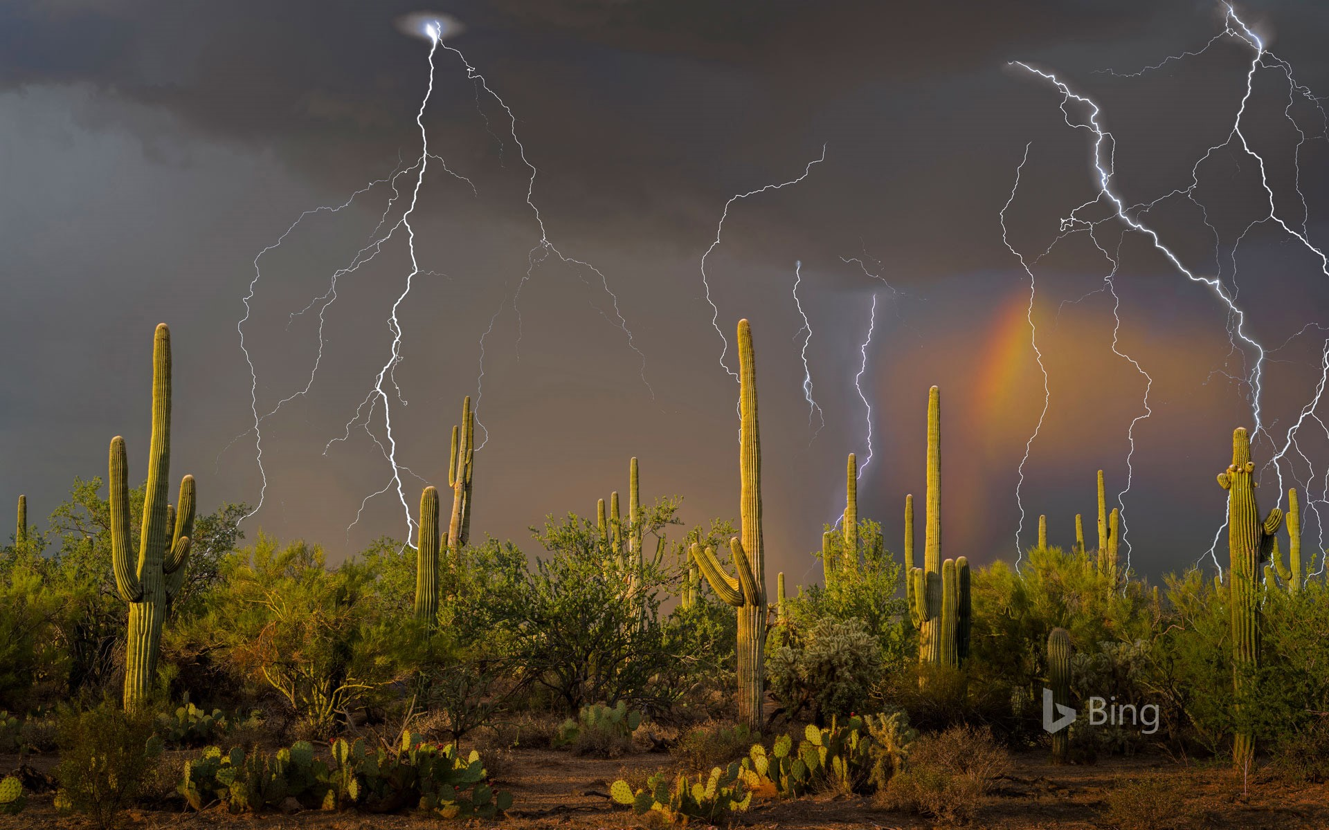 Lightning storm in the Tortolita Mountain foothills, north of Tucson, Arizona, USA