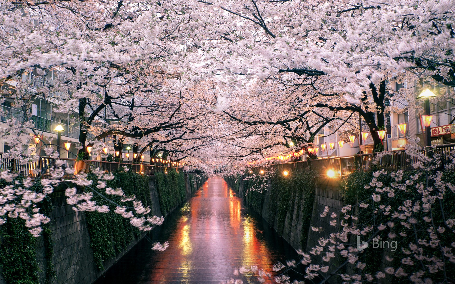 Cherry blossoms over the Meguro River, Tokyo, Japan (© taketan/Getty Images)