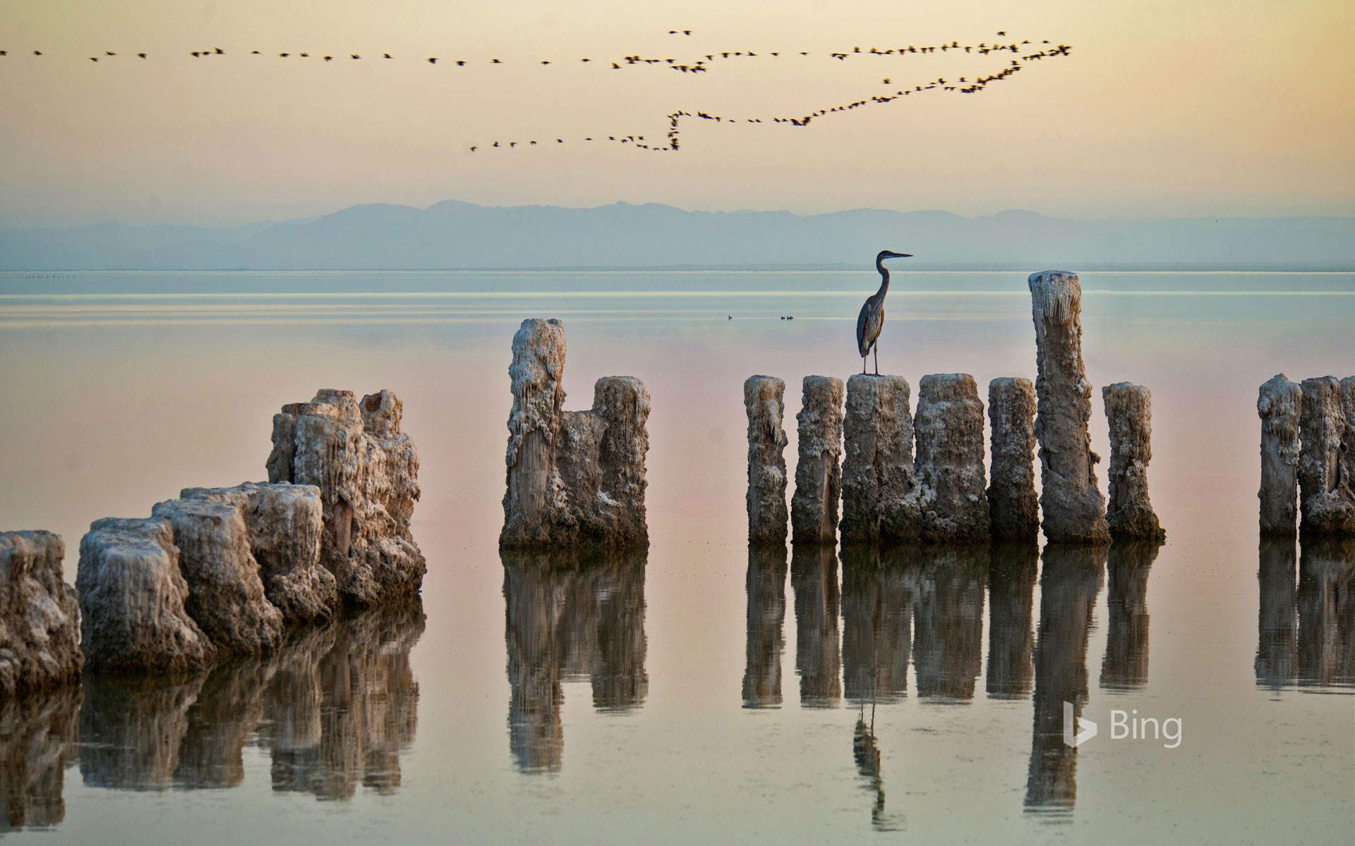 A heron perches on a piling at the Salton Sea in California, USA