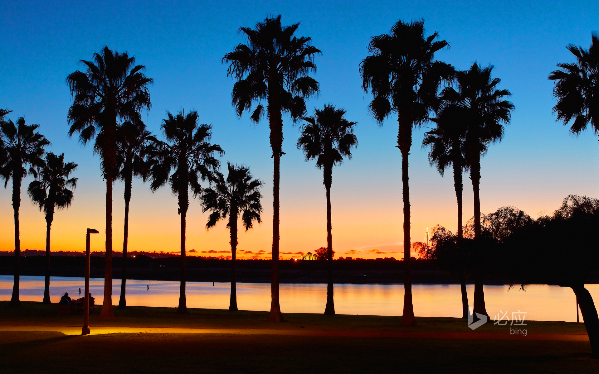 Palm Grove at Mission Bay at Sunset, San Diego, California, USA