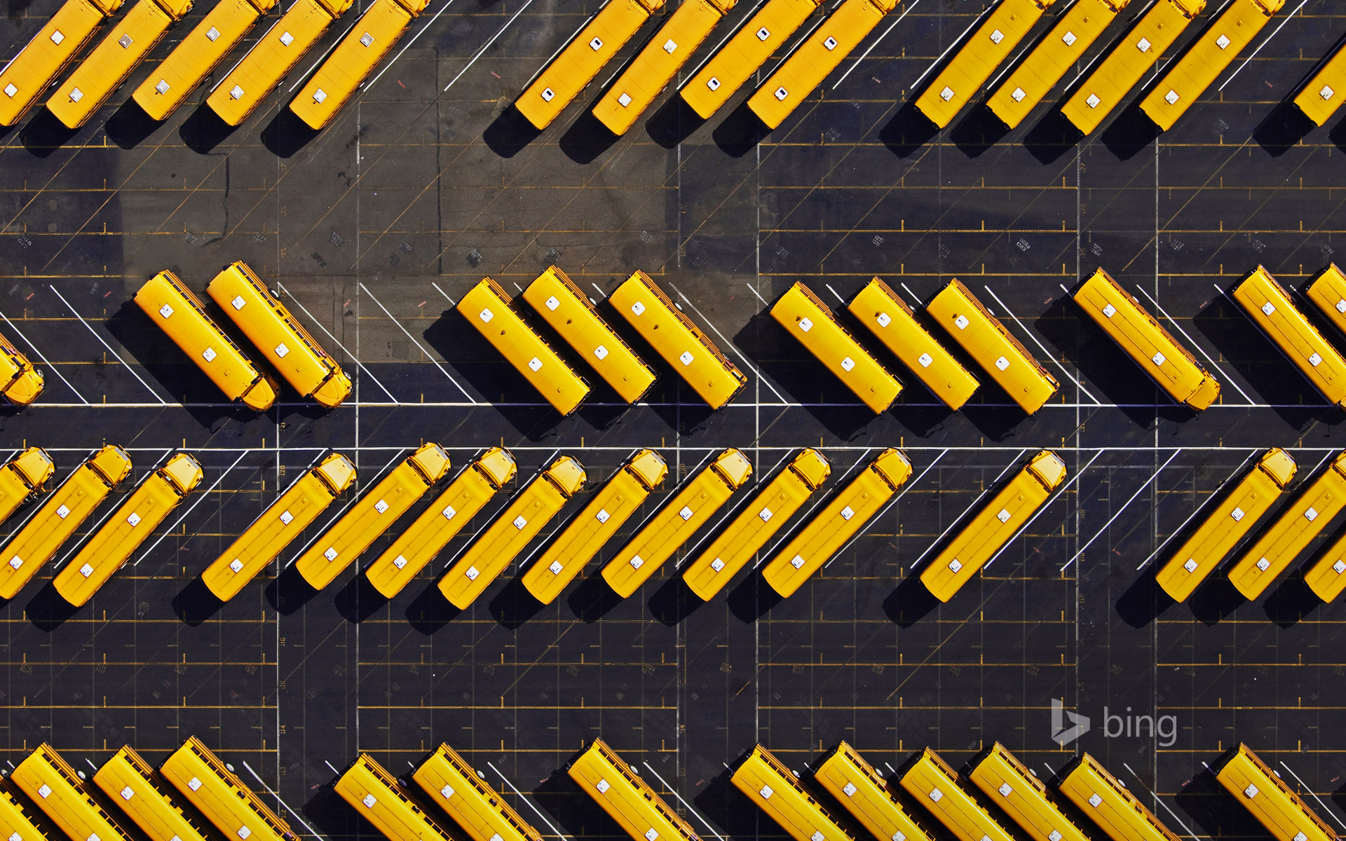 Yellow school buses parked in a lot