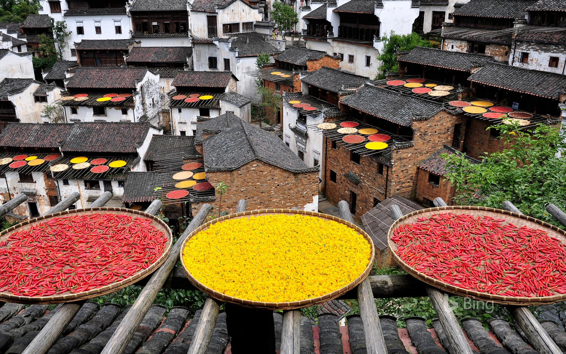 Households in Lingling are drying peppers and chrysanthemums, Wuyuan, Jiangxi