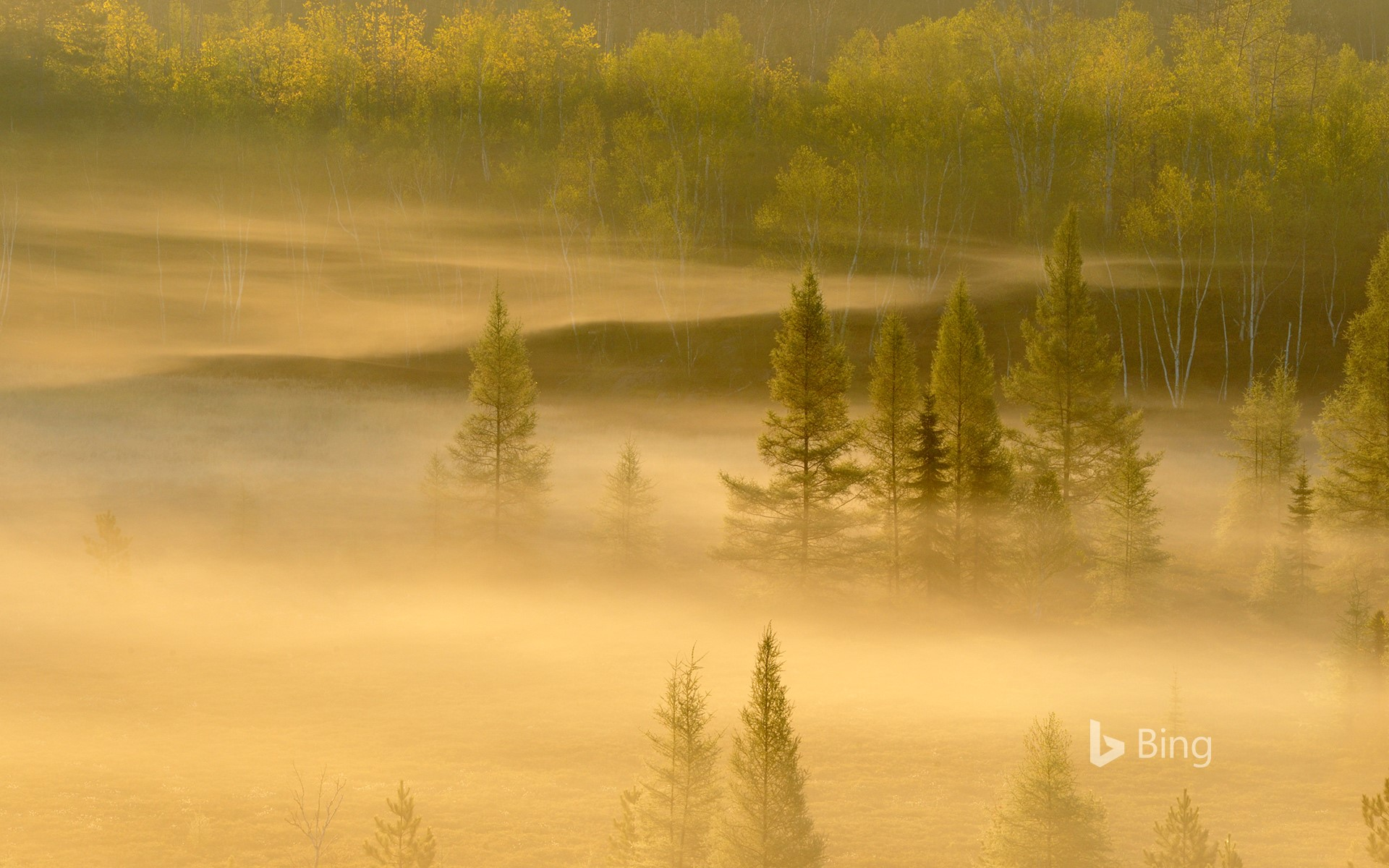 Spring trees in a misty valley, Lively, Sudbury, Ontario, Canada