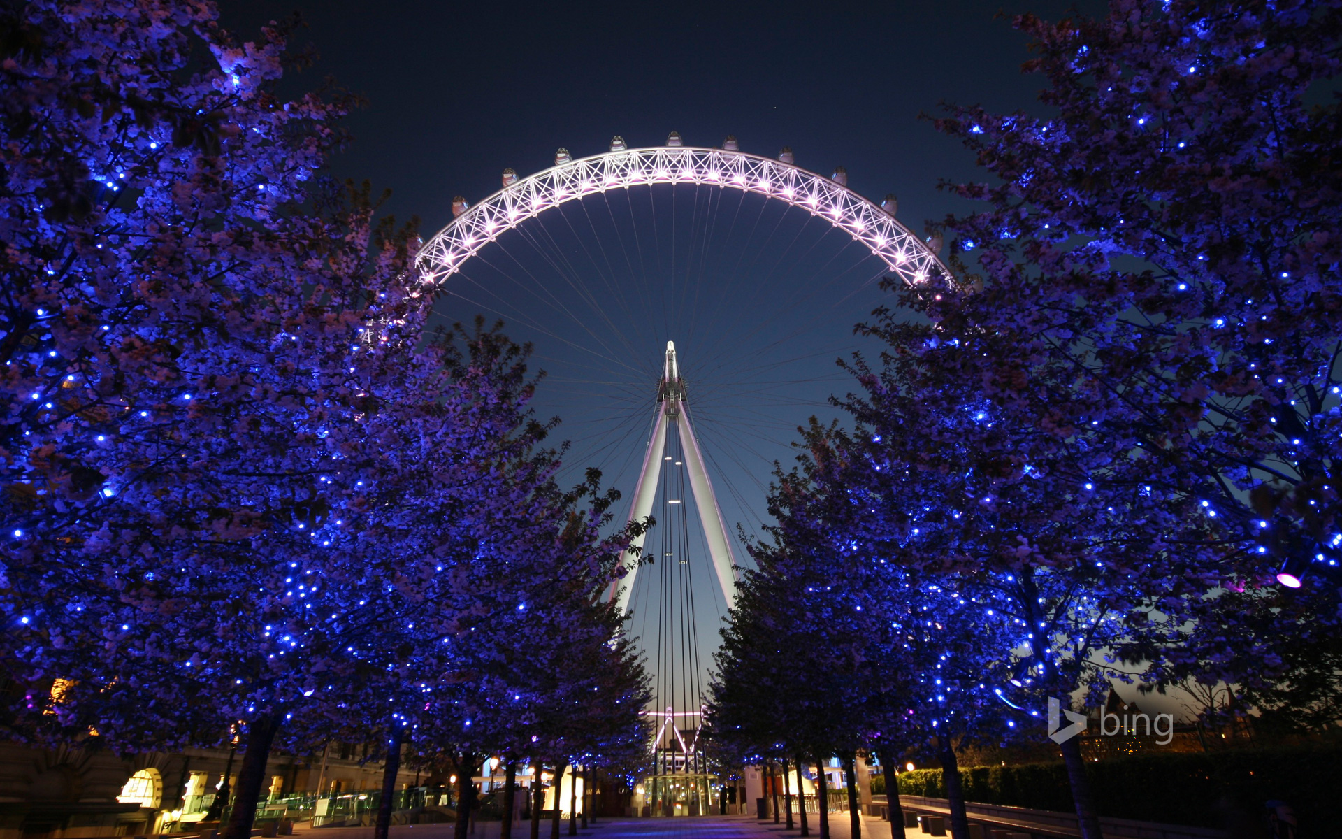 The London Eye at night behind a row of illuminated trees