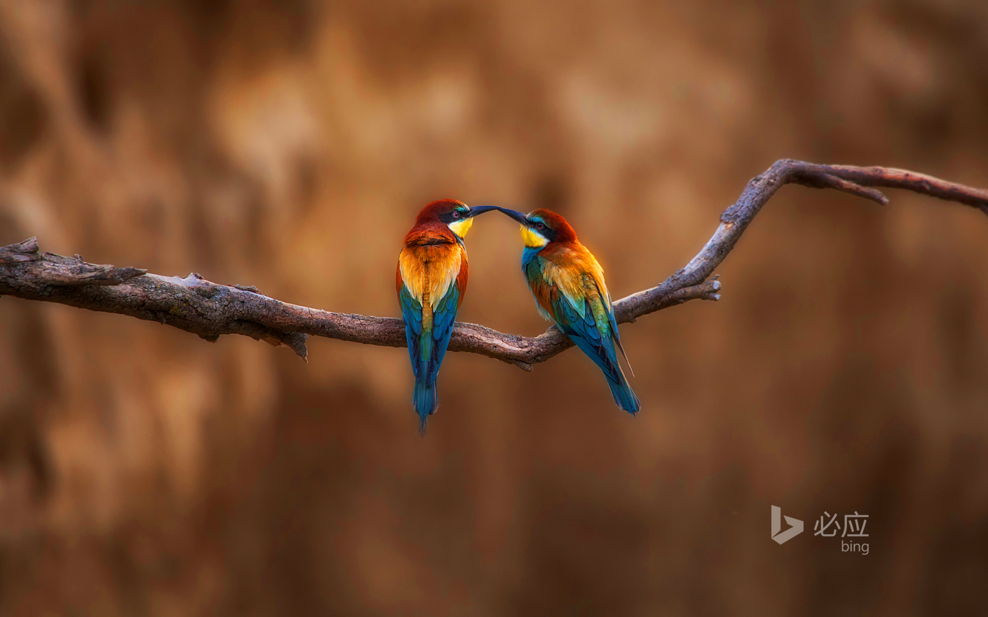 Two birds resting on a branch