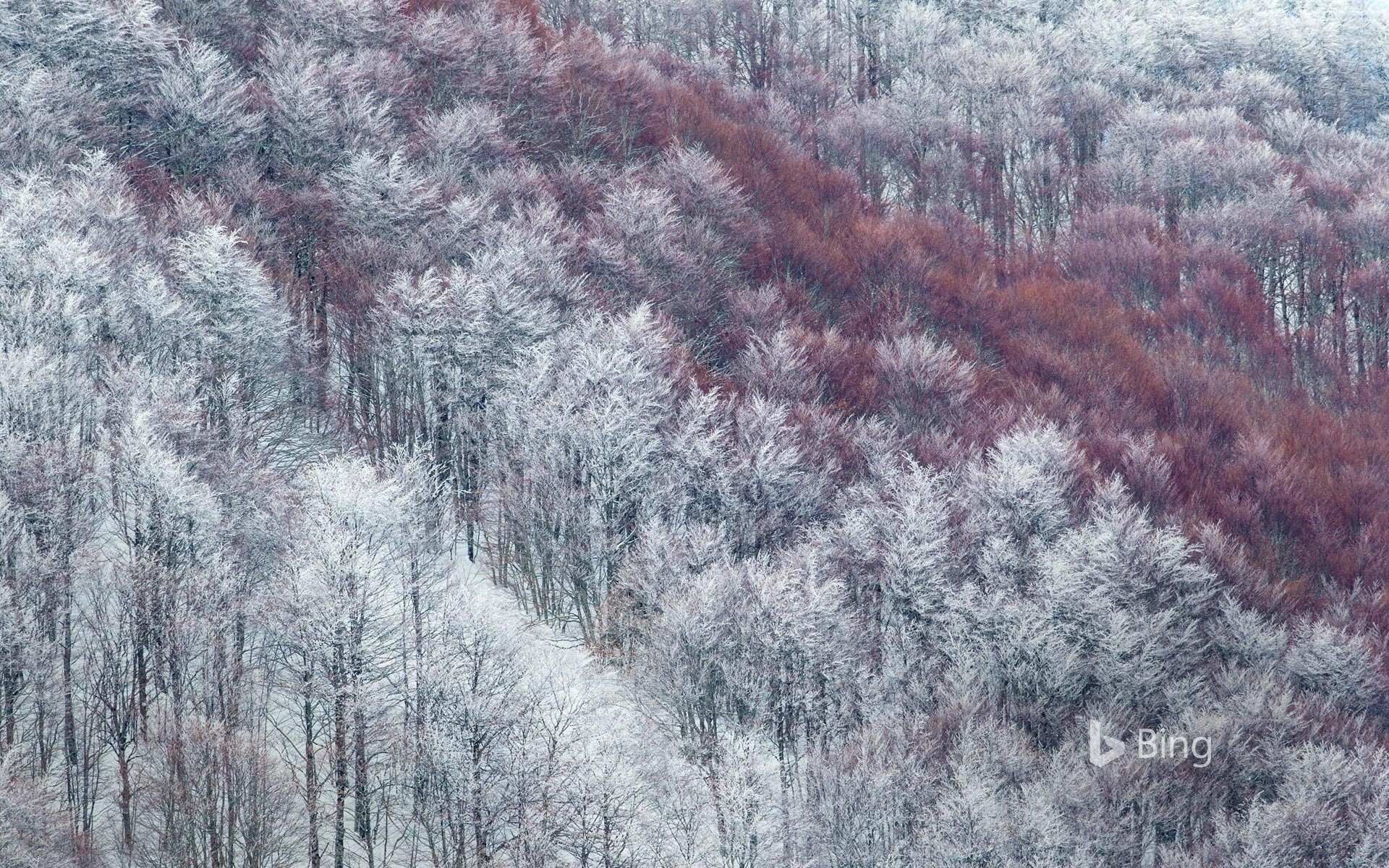 Partly snow-covered slope in Val Cervara, an old-growth beech forest, Abruzzo, Italy