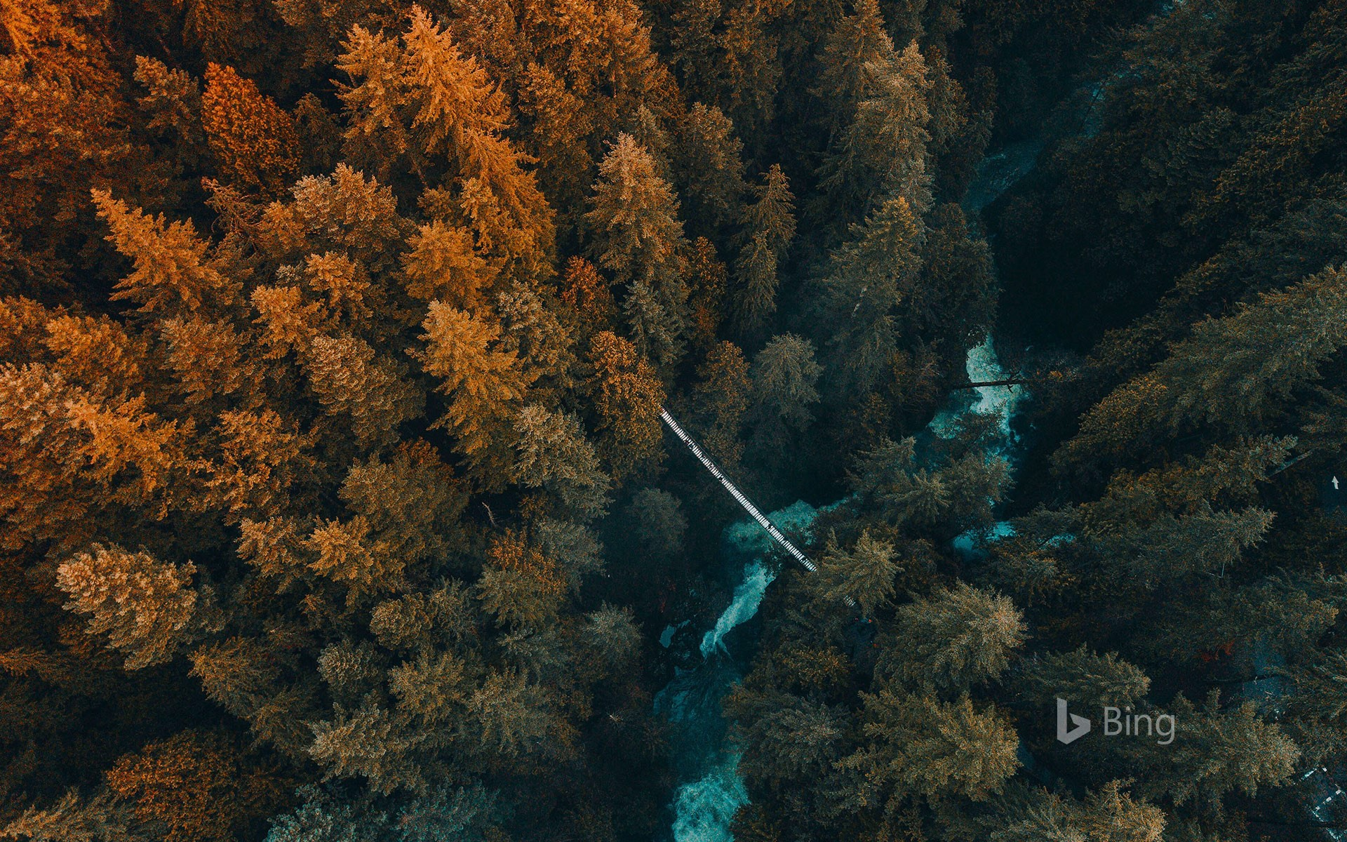 Aerial view of forest, Vancouver, B.C., Canada