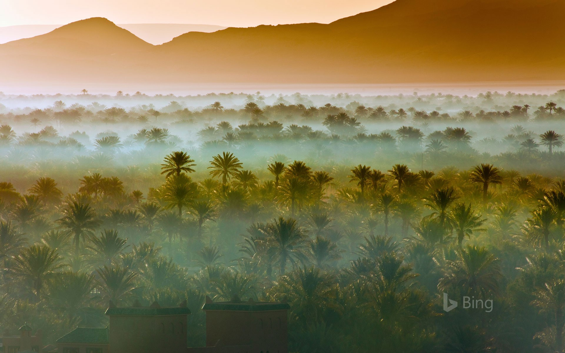 Date palm groves near Zagora, Morocco (© Frans Lemmens/Getty Images)