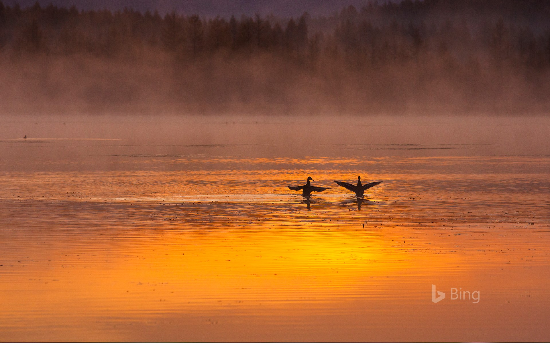 [Today's Tanabata] A pair of swans in Aershan National Forest Park, Inner Mongolia