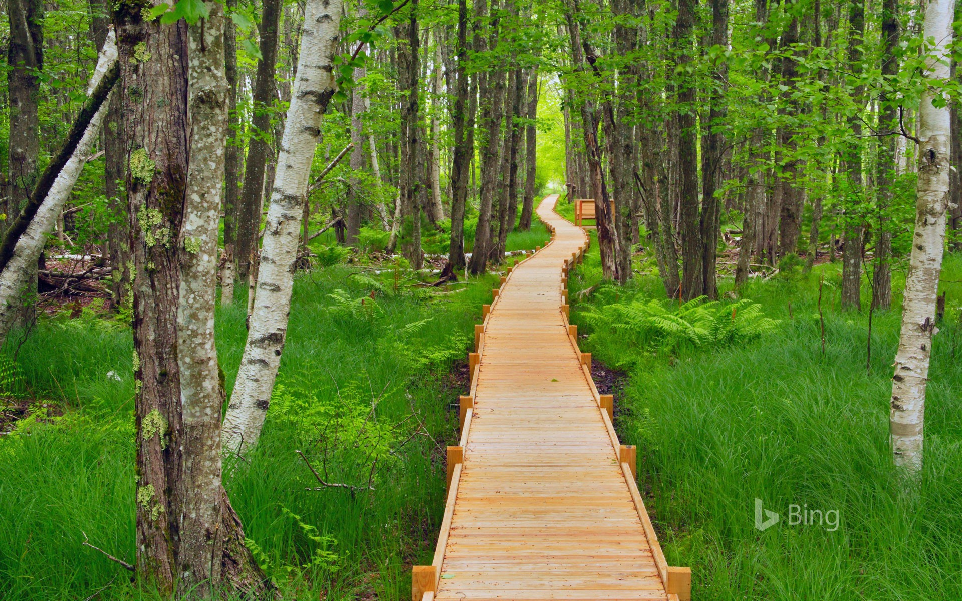 Jesup Path in Acadia National Park, Maine