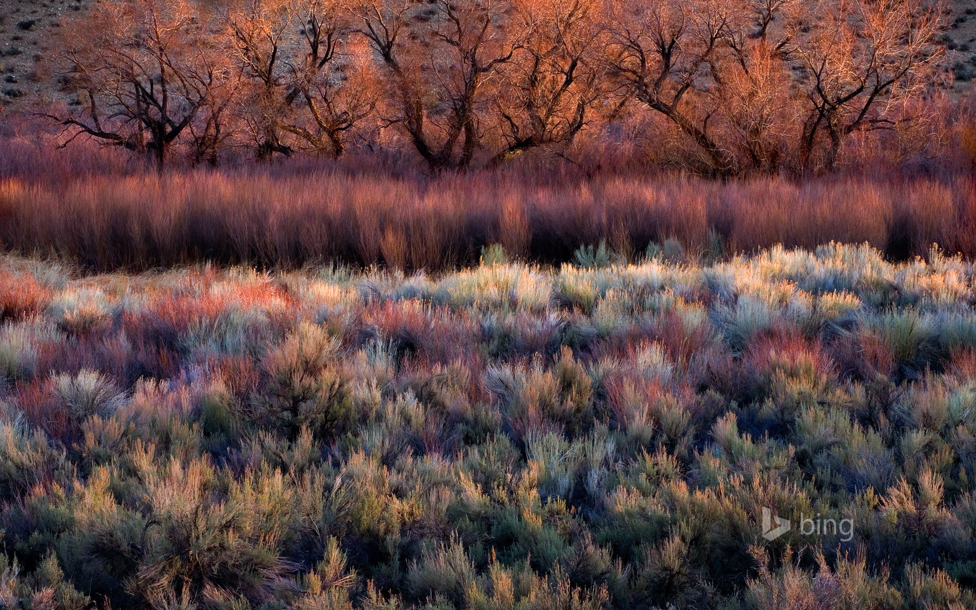 Foliage, including cottonwoods, willows, sage, and rabbitbrush, in California's Owens Valley