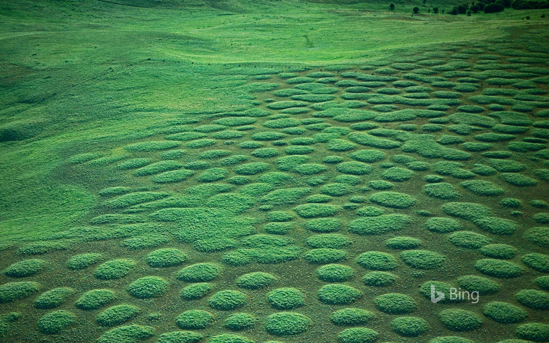Mima mounds at Oregon's Zumwalt Prairie, USA